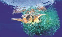 Các loại lưới ma gây nguy hại đến sinh vật biển