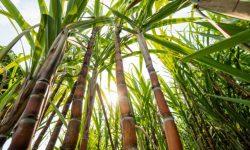 NatureWorks đầu tư nhà máy sản xuất PLA ở Thái Lan